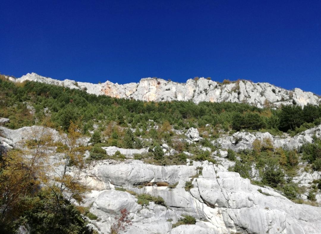 Escursione nel vallone di Pennapiedimonte - 17 ottobre 2020 - AbruzzoNaturista